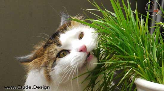 گیاهان سمی برای حیوانات خانگی
